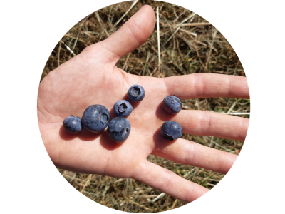 Jö's Frucht Heidelbeeren