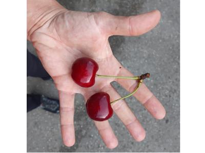 Jö's Frucht Kirschen